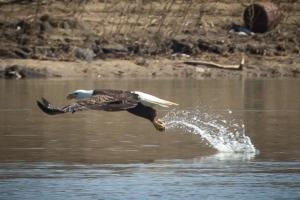 eagle catch