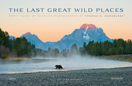 First Light - Grizzly Bear - Print - 3053